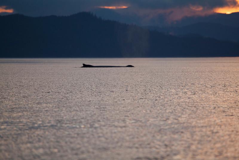 Alaska-160.jpg
