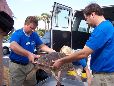 Loggerhead Turtle Release Jan 2005