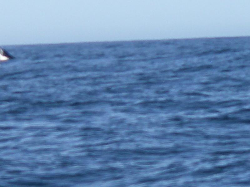 Sydney trip and Mirimbula 059.JPG