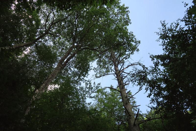 Enloe Creek Trail - 4,200'