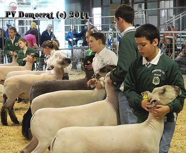 County Livestock Show Pt 1