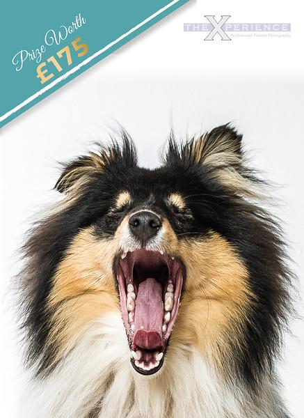 Dog banner.jpg