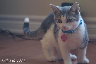 Kitty Cats - 2009