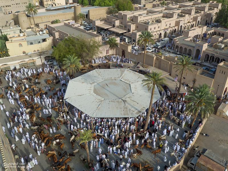 DJI_0060 copy- Oman.jpg