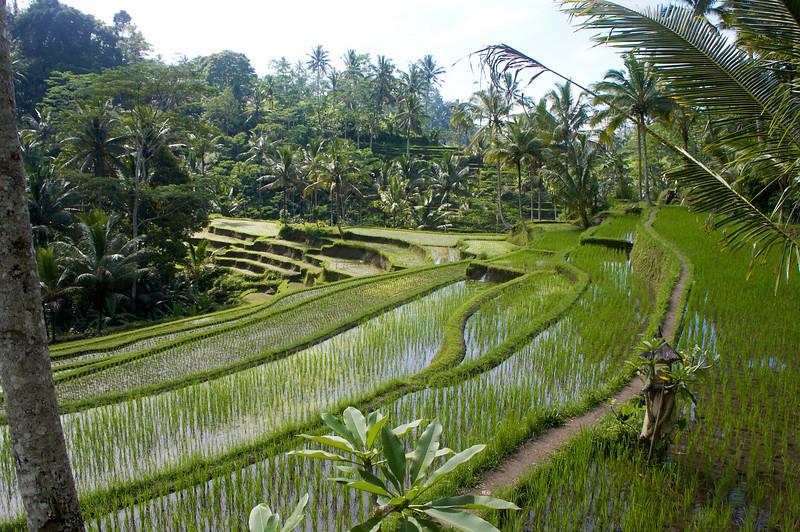 indonesia17.jpg
