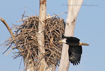 Lake Waco Eagles 2012