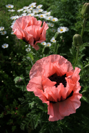 Flowers_060510_0031.JPG