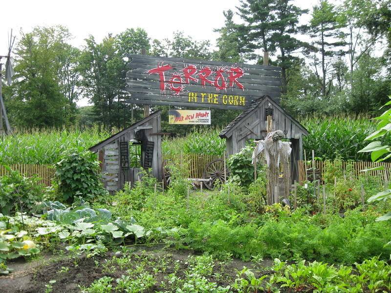 Actual corn was planted for the Terror in the Corn haunt.