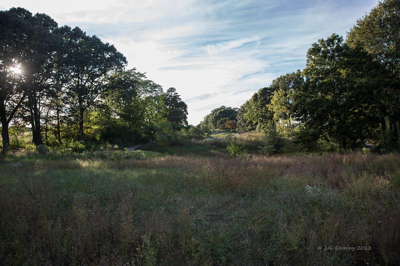 A September Evening Tall Pine State Preserve, Mantua, New Jersey