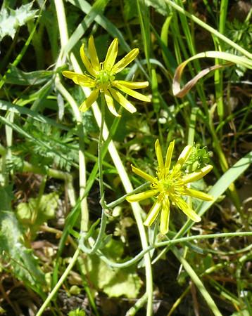 Shell Ridge flowers - April 2008