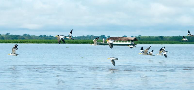 Iquitos_12.jpg