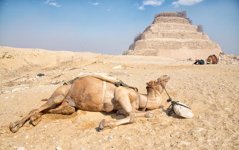 saqqara_unas_tomb_serapeum_dahshur_red_bent_pyramid_20130220_5137.jpg
