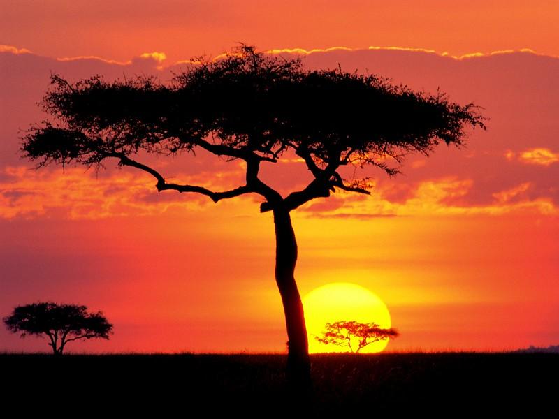 Masai Mara Game Reserve at Sunset, Kenya.jpg