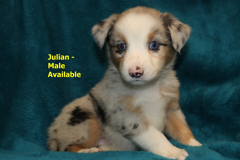 Julian has been reserved as of 11/16/19