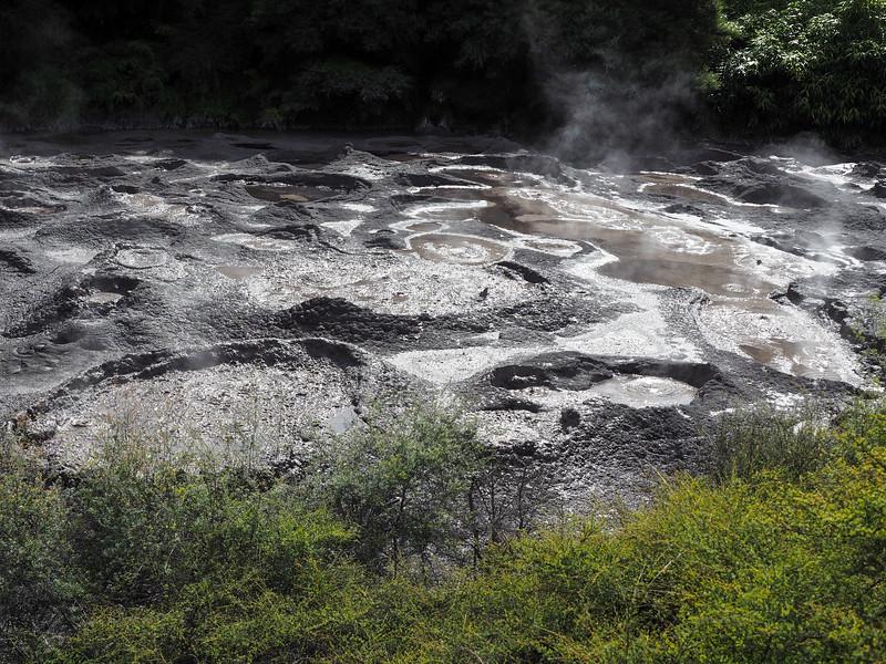 Bubbling mud in Rotorua