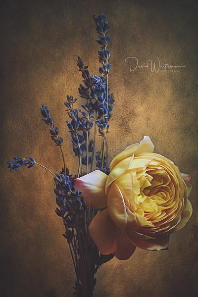 Lavender Lullaby.jpg