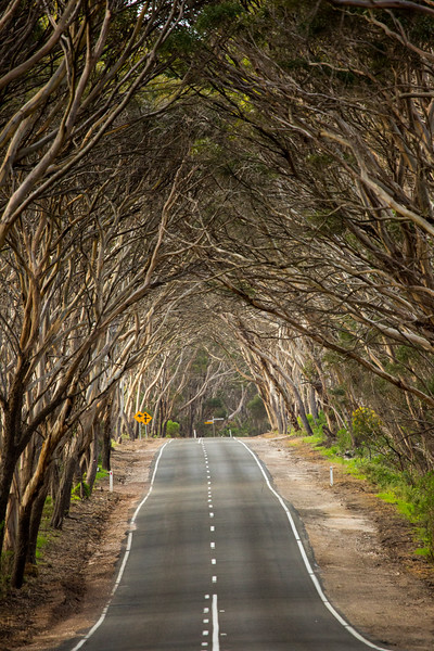 Country road, Fleurieu Peninsula