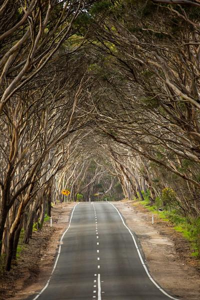 Country road, Fleurieu Peninsula
