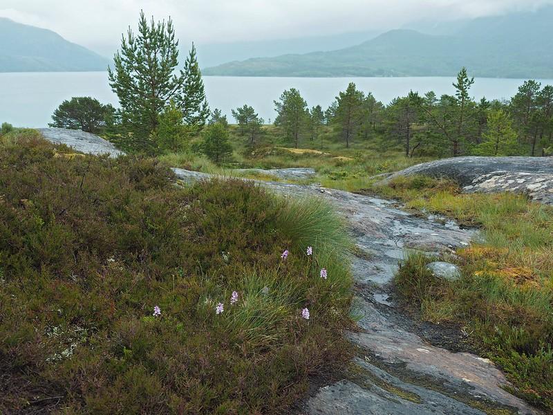 Furøy 12-07-17 (2).jpg