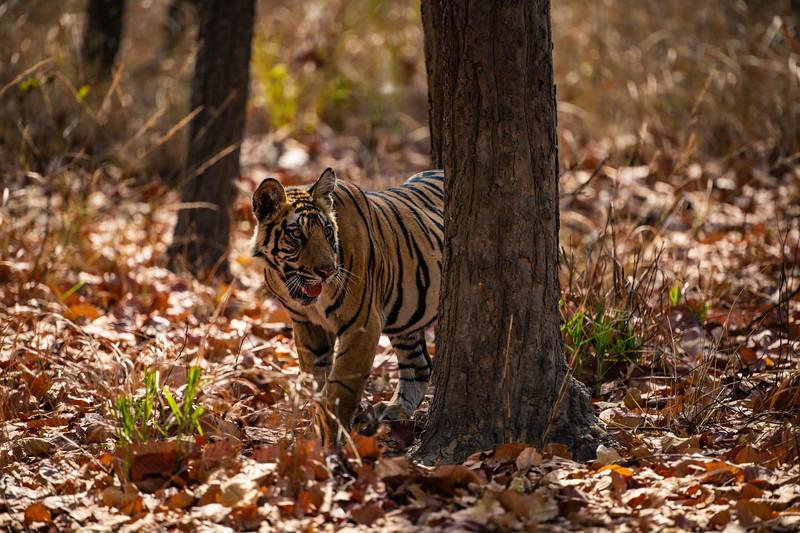 India_April_2019-2434.jpg