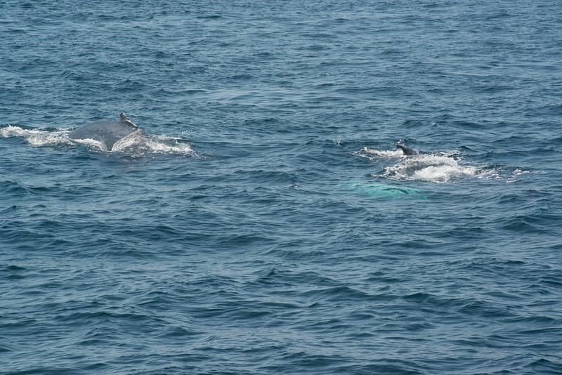 humpbacks-4182.jpg
