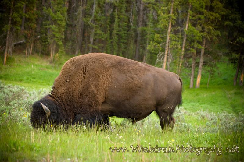20100713_Yellowstone_2892_1.jpg