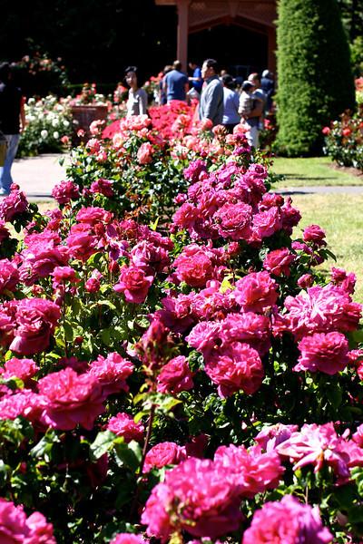 Portland International Rose Test Garden  2230.jpg