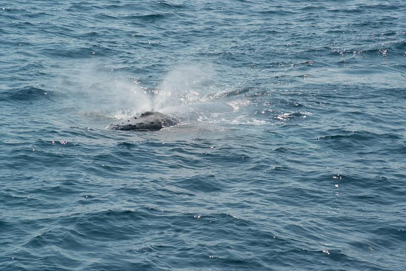 humpbacks-4116.jpg