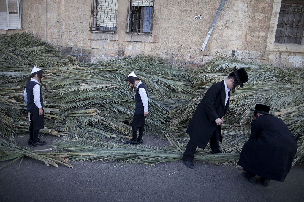 . Ultra Orthodox Jewish children  shop for palm branches for their Sukkah (tabernacle or booth) which will be used during the upcoming Jewish festival of Sukkoth, in Mea Shearim neighbourhood on September 15, 2013 in Jerusalem, Israel. The Feast of the Tabernacles, which begins Wednesday evening September 18, 2013, commemorates the biblical Hebrews\' 40 years of wandering in the desert after the exodus from Egypt some 3200 years ago.  (Photo by Lior Mizrahi/Getty Images)