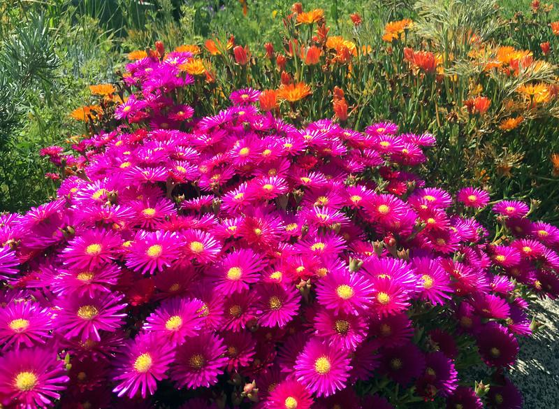 emetery flowers.jpg