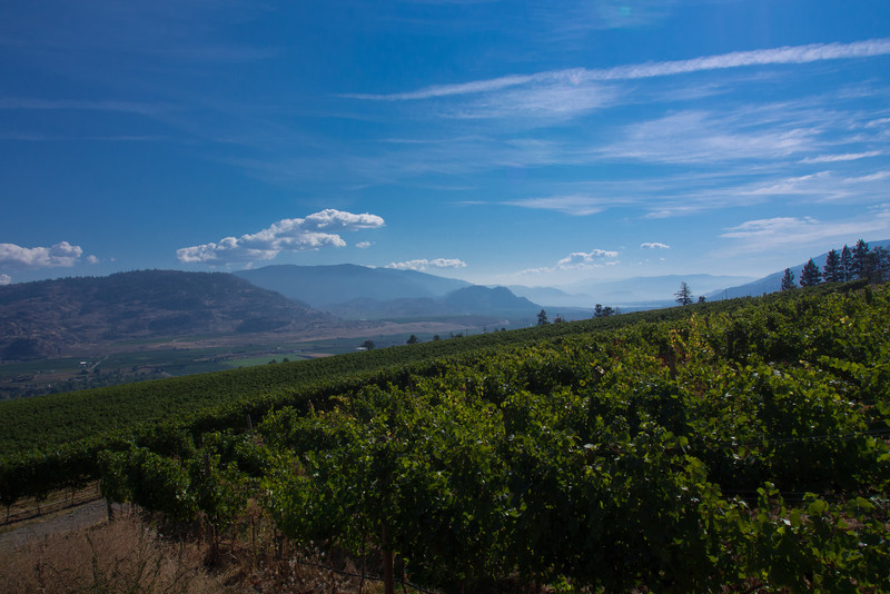 hills vineyard-2.jpg