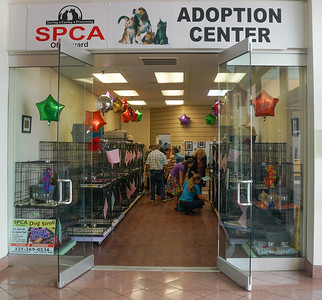 SPCA Merritt Island Mall Cat Adoption Store Grand Opening