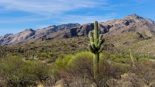 2017 Sabino Canyon - Tucson