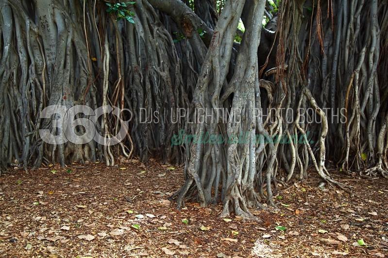 Banyan Tree_batch_batch.jpg