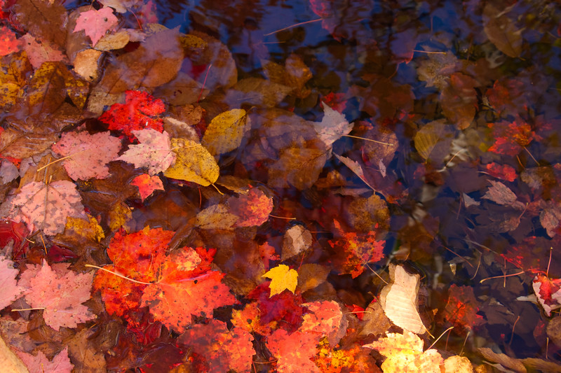 IMG_0375 Autumn leaves in Bubble Pond, Acadia National Park,Me..jpg