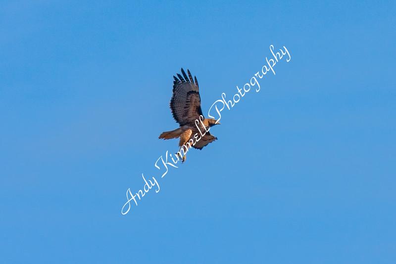 redhawk-1-2.jpg