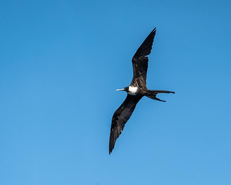 Galapagos-3594.jpg