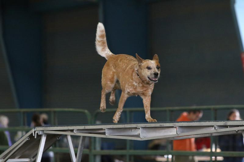 3-10-2019 Bloodhound-9697.jpg