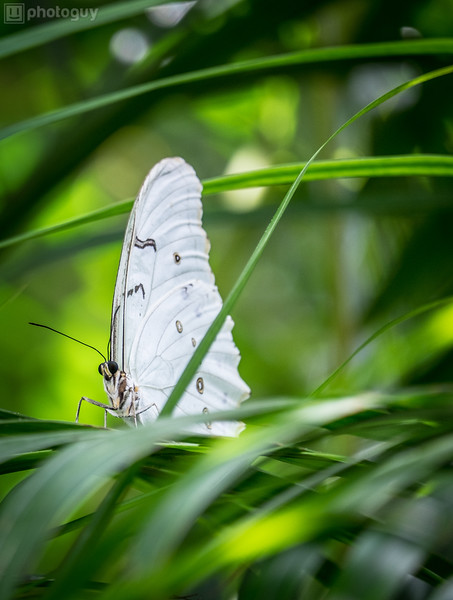 20140628_BUTTERFLY_WORLD (17 of 28)