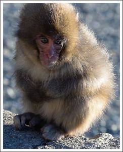 Hakachizaki Monkeys