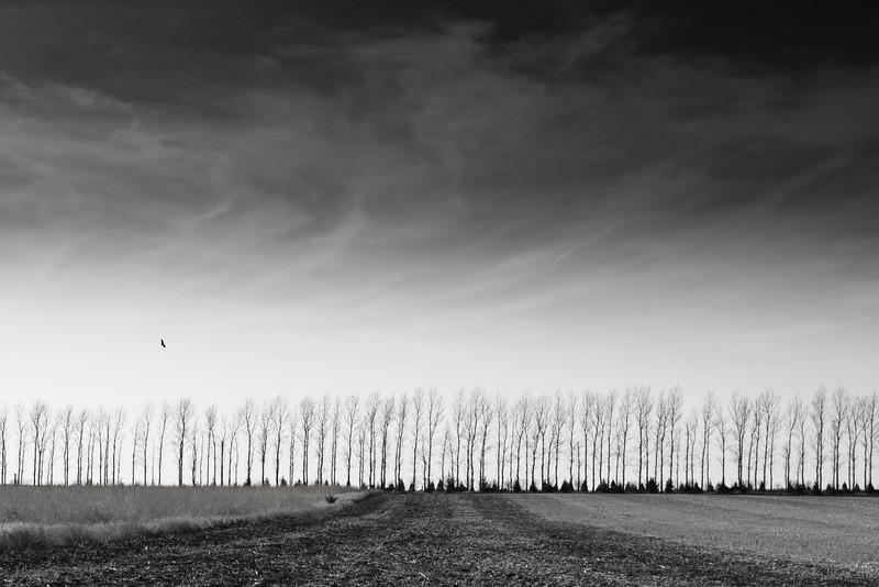 Black & White Landscape II