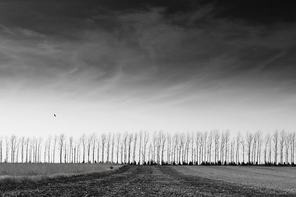 Black & White Landscape II