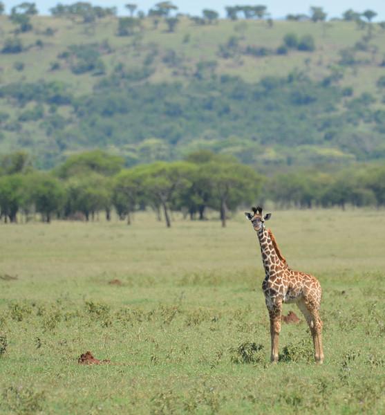 East Africa Safari 260.jpg
