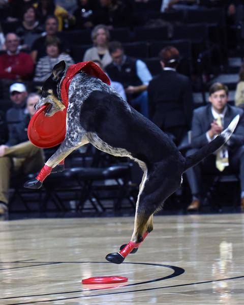 Frisbee dogs 2016-07.jpg