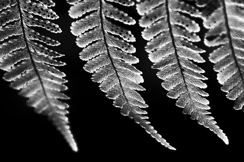texture-16.jpg