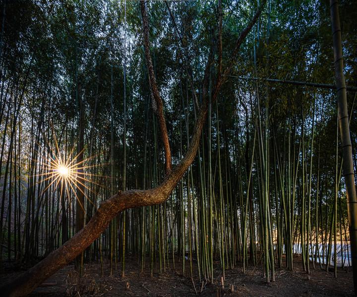 Bambooforest_1.jpg