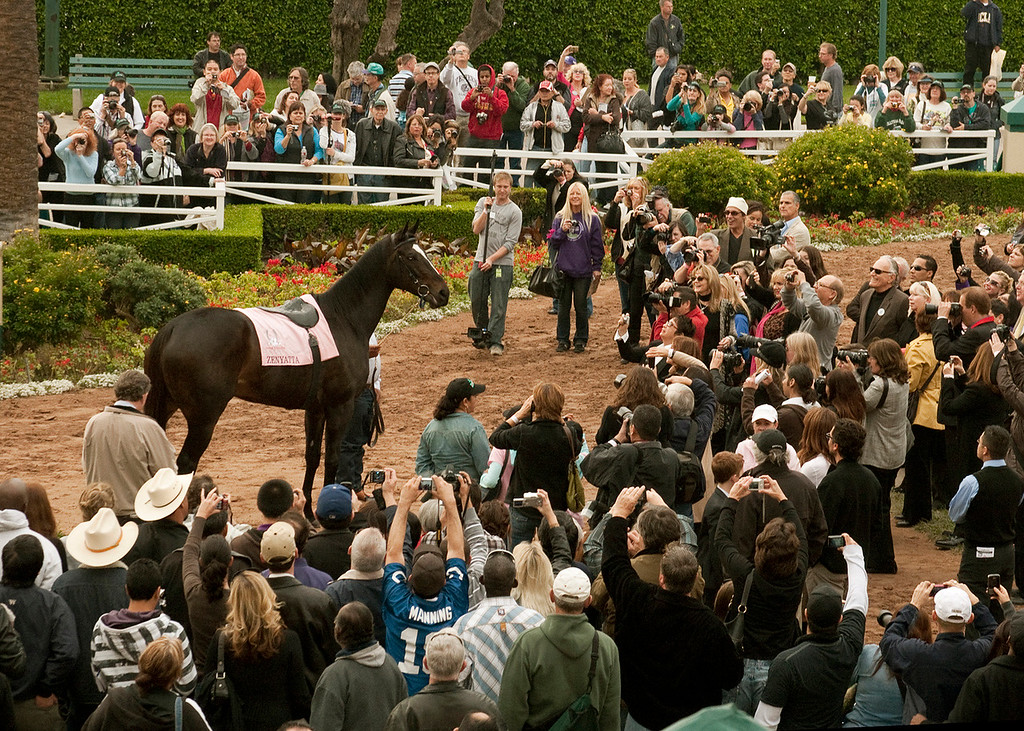 . This photo released by Benoit Photo, Zenyatta, who became the glamour queen of racing with 19 wins in 20 starts and a record $7.3-million in earnings, basks in the attention of thousands of fans during a retirement ceremony at Hollywood Park , Inglewood, Calif., Sunday, Dec.  5, 2010.   (AP Photo/Benoit Photo)
