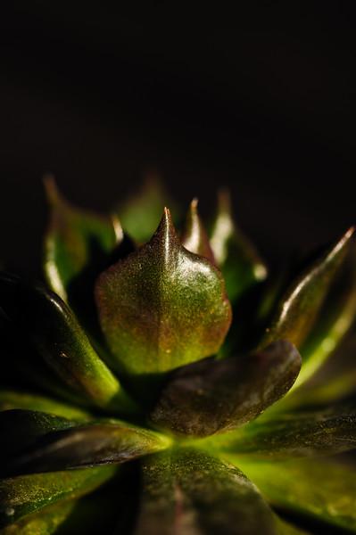 succulents 020220-1341.jpg