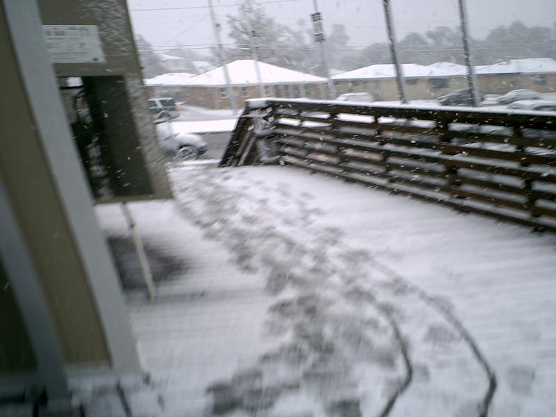 snowday12-11-08 008.jpg