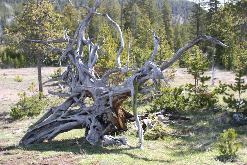tree trunk (I think this looks like an animal skull)